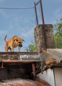 gettyimages-1188187912-170667a.jpg