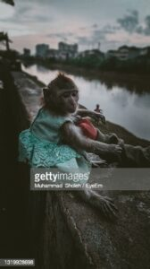 gettyimages-1319928698-170667a.jpg