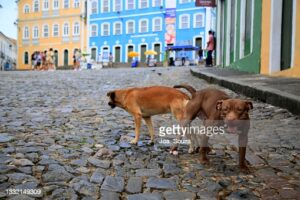 gettyimages-1332149309-170667a.jpg