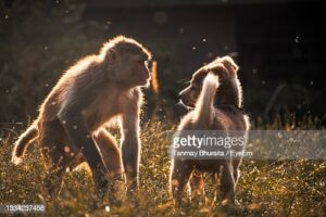 gettyimages-1334237458-170667a.jpg