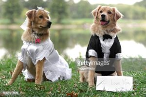 gettyimages-166191899-170667a.jpg
