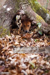 gettyimages-454783851-170667a.jpg