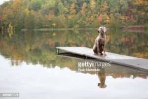 gettyimages-485667779-170667a.jpg