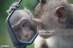 gettyimages-902488692-170667a.jpg