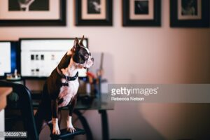 gettyimages-936359738-170667a.jpg