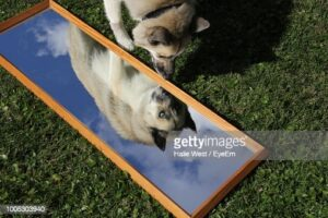 gettyimages-1005303940-170667a.jpg