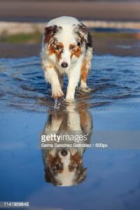 gettyimages-1141959845-170667a.jpg