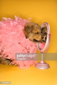 gettyimages-124234016-170667a.jpg
