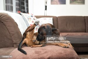 gettyimages-1283883140-170667a.jpg