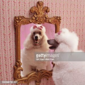 gettyimages-200396730-001-170667a.jpg