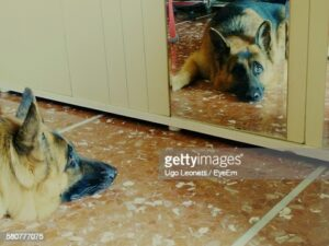 gettyimages-580777075-170667a.jpg