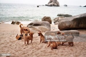 gettyimages-702613907-170667a.jpg